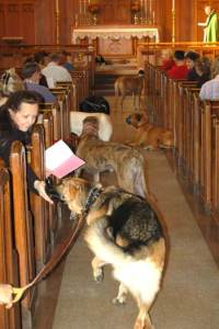 Dogs waiting to be blessed at St. Paul's.